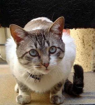 Que significa soñar con gatos...?